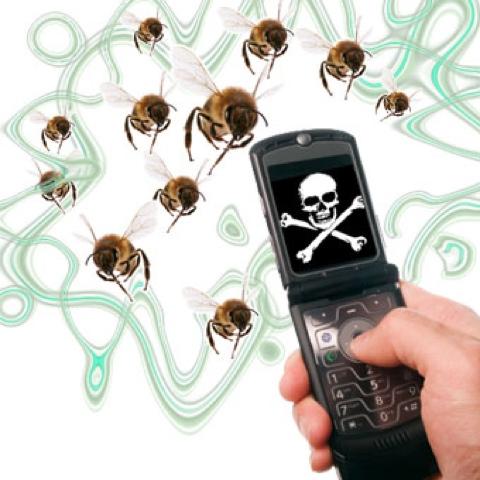 Эксперимент на пчелах. Как мобильные телефоны уничтожают насекомых